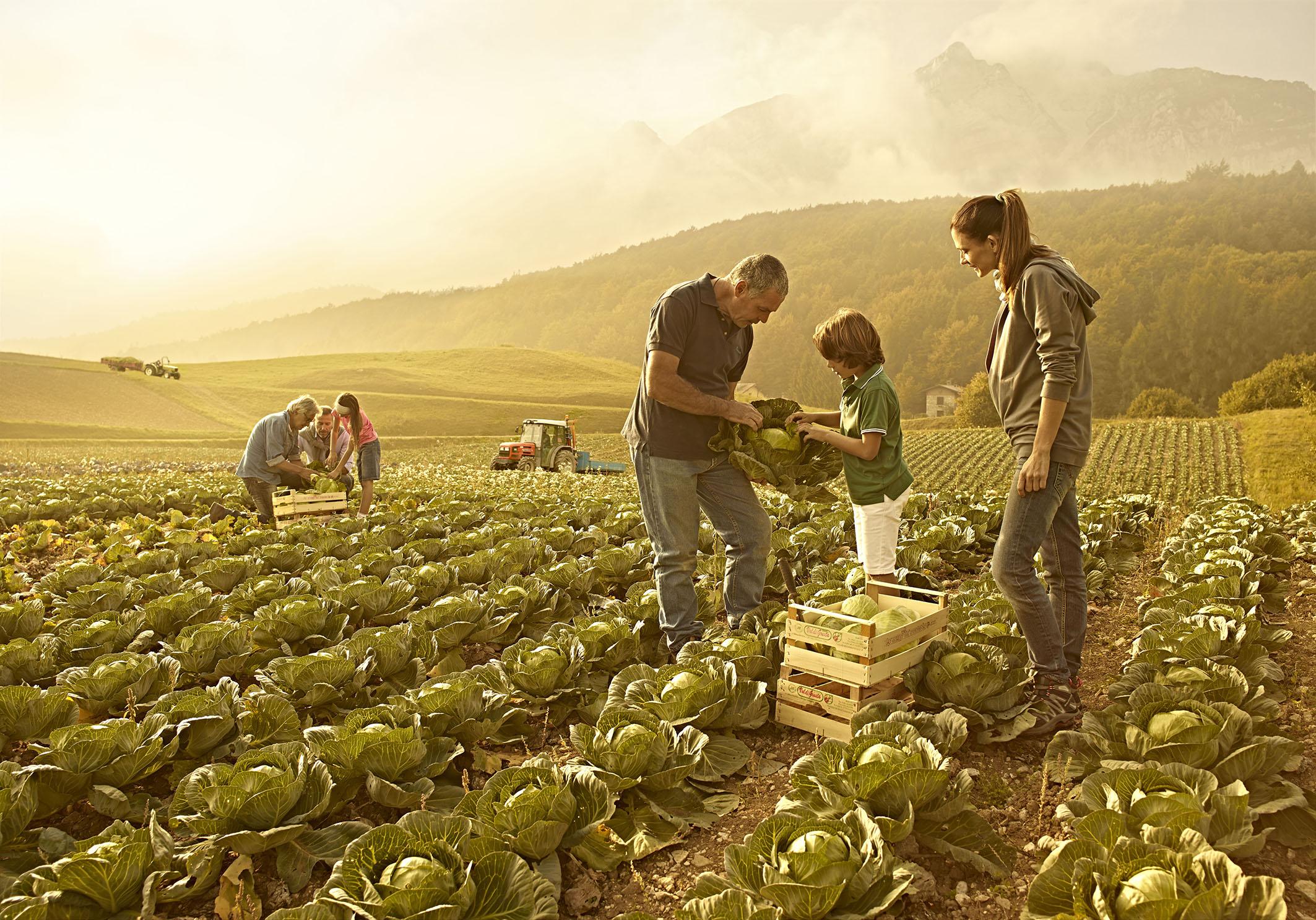 Il sistema di consulenza aziendale in agricoltura: prospettive ed opportunità per il sistema agroalimentare e per le imprese delle aree rurali in Regione Campania